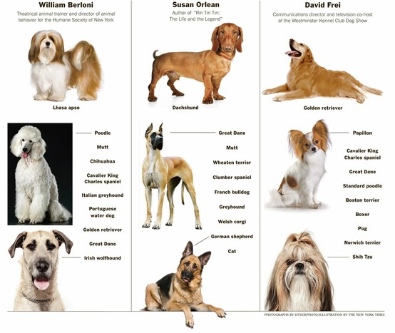 List Of Small Dog Breeds Picture Of Small Dog Breed Best Small